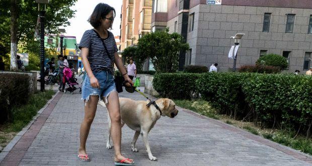 dogs-china